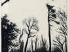 Winter_TreesMTmedium