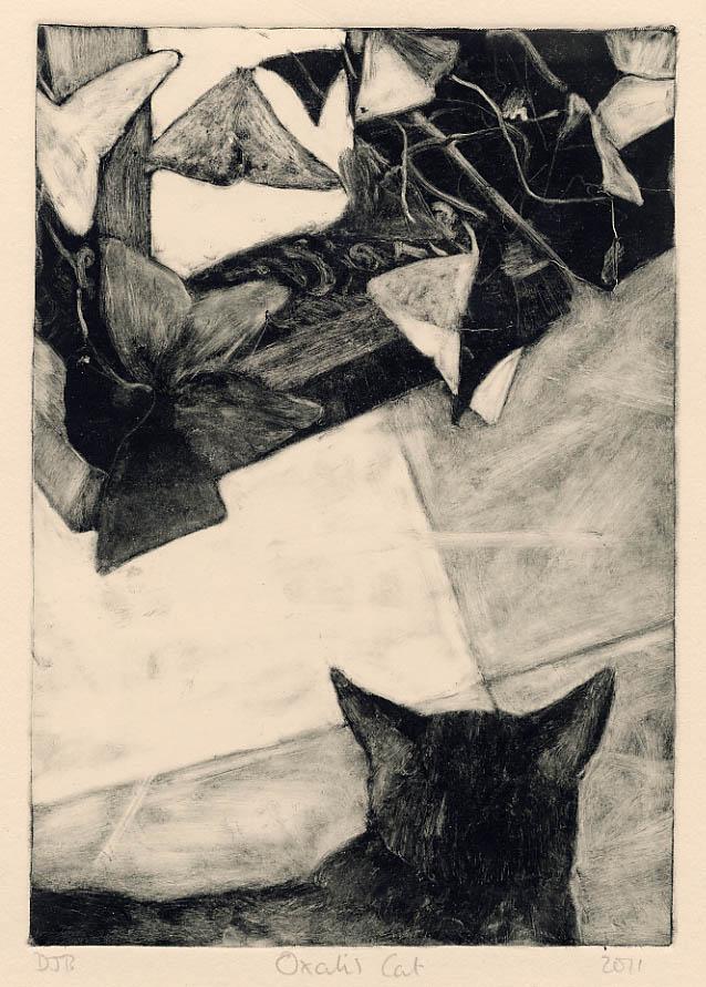 Oxalis Cat