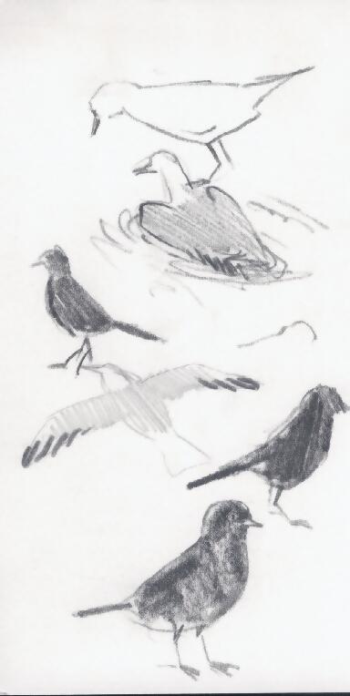 BirdsSketch1