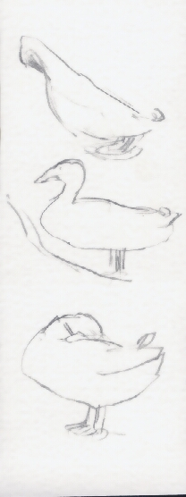 DucksSketch1