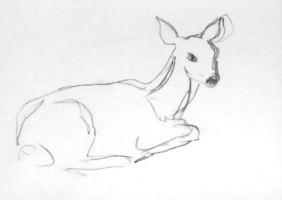 Deer on Iwojima Island, Japan