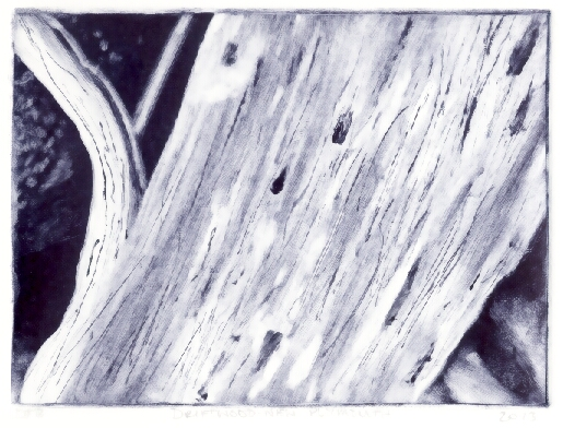 Monotype, showing bleached drift